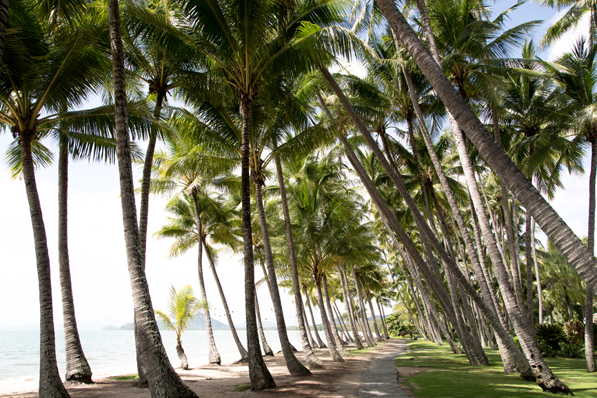 View looking through palm trees in Palm Cove, Australia