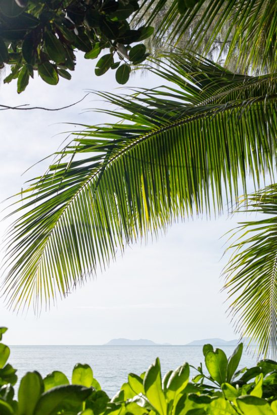 View of the ocean through palm leaves in Palm Cove, Australia