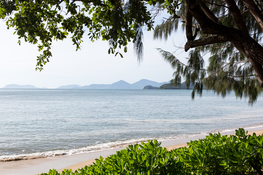 View of the ocean looking through the trees Palm Cove, Australia