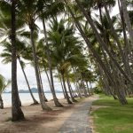 Riding a bike through the palm trees in Palm Cove, Queensland, Australia