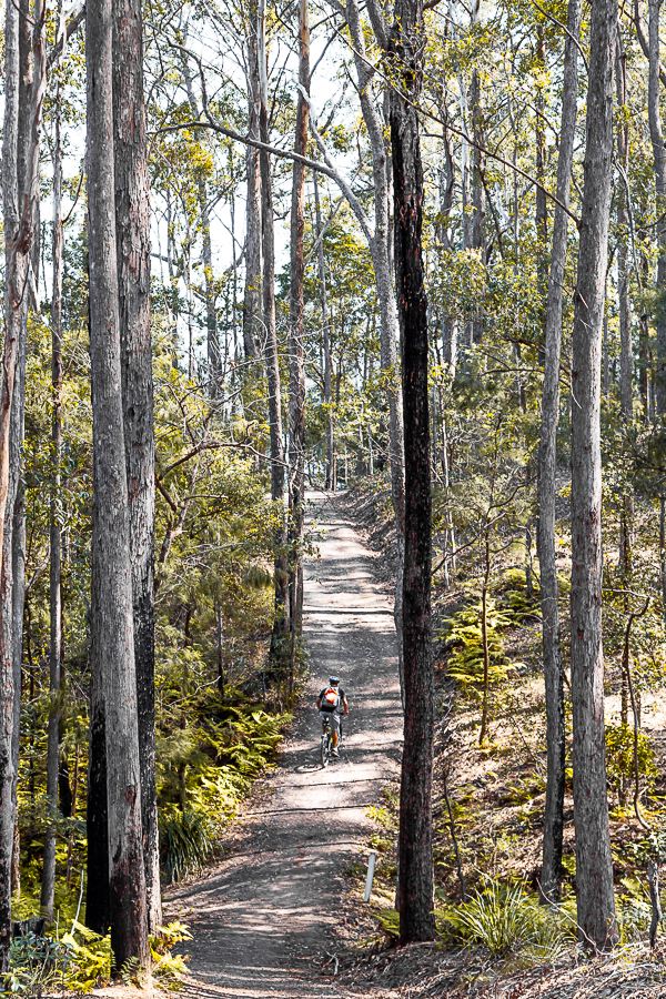 Bike rider on forest bike track